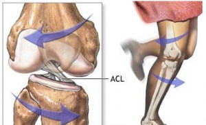 acl-cross-section