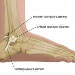 ankle-ligaments-sprains