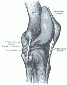 how-treat-patellar-tendon-photo